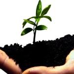 hand met aarde en jong plantje